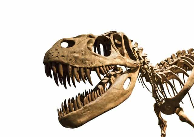 Dinosaur-teeth-on-jawbone-of-T-Rex-AdventureDinosaurs