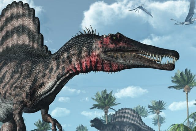 Many-spinosaurus-fossils-have-been-found-in-the-Kem-Kem-beds-in-Morocco-AdventureDinosaurs