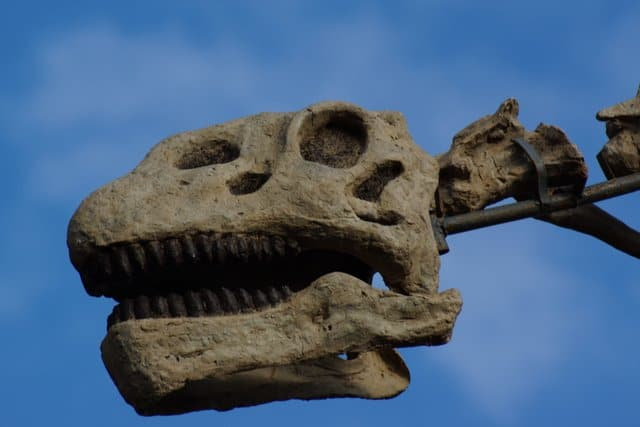 What Are Long Neck Dinosaurs (Types, Size, List ...