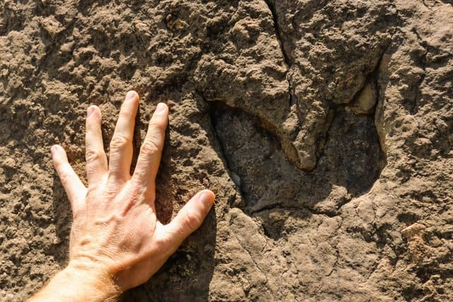 dinosaur-footprint-compared-to-human-hand-adventuredinosaurs