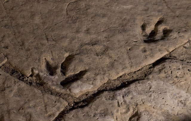 dinosaur-footprints-adventuredinosaurs