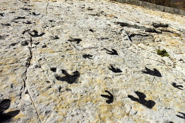 dinosaur-tracks-from-millions-of-years-ago-adventuredinosaurs
