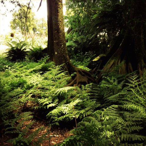 ferns-and-vegetation-that-omnivore-dinosaurs-can-eat-adventuredinosaurs