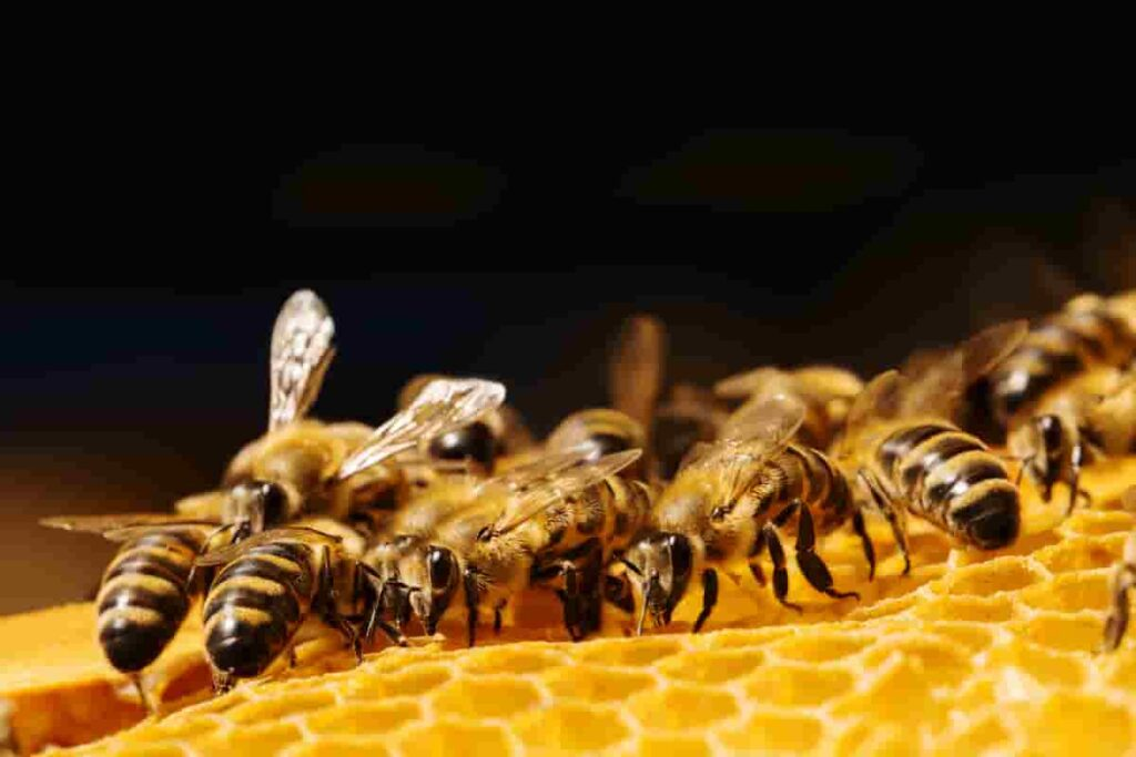 Ancient-bees-existed-in-prehistoric-times-AdventureDinosaurs