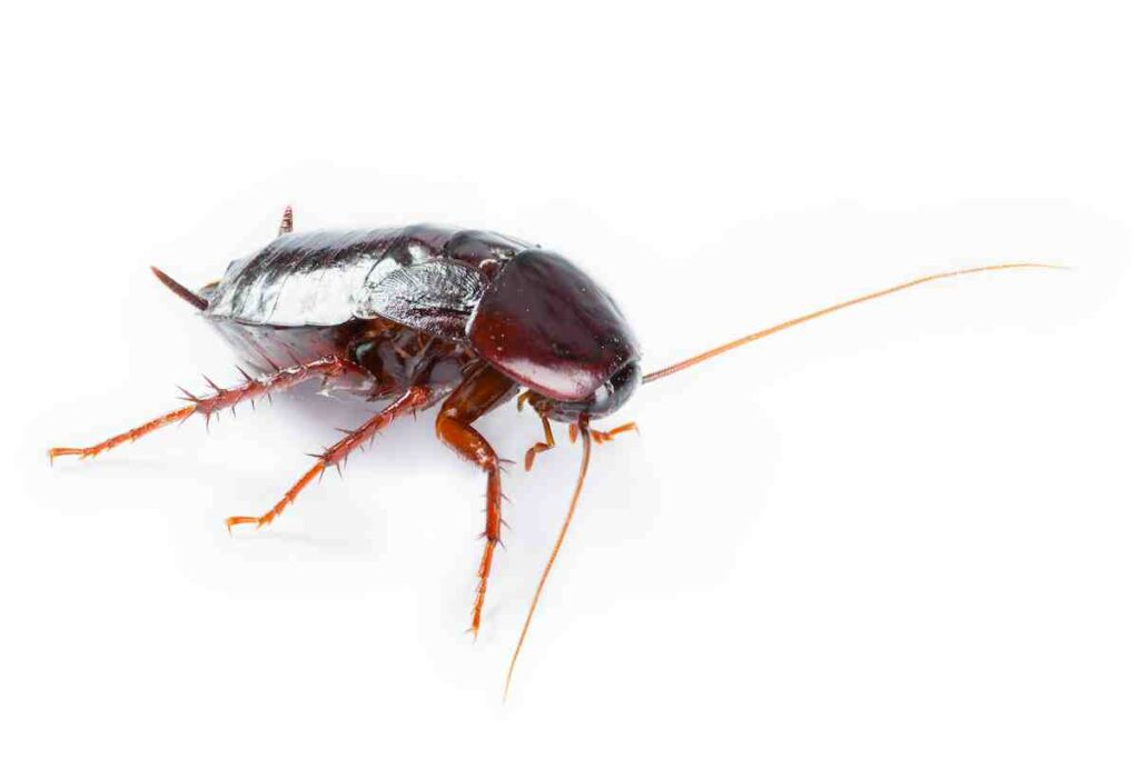 Cockroaches-were-resilient-and-survived-longer-than-the-dinosaurs-AdventureDinosaurs