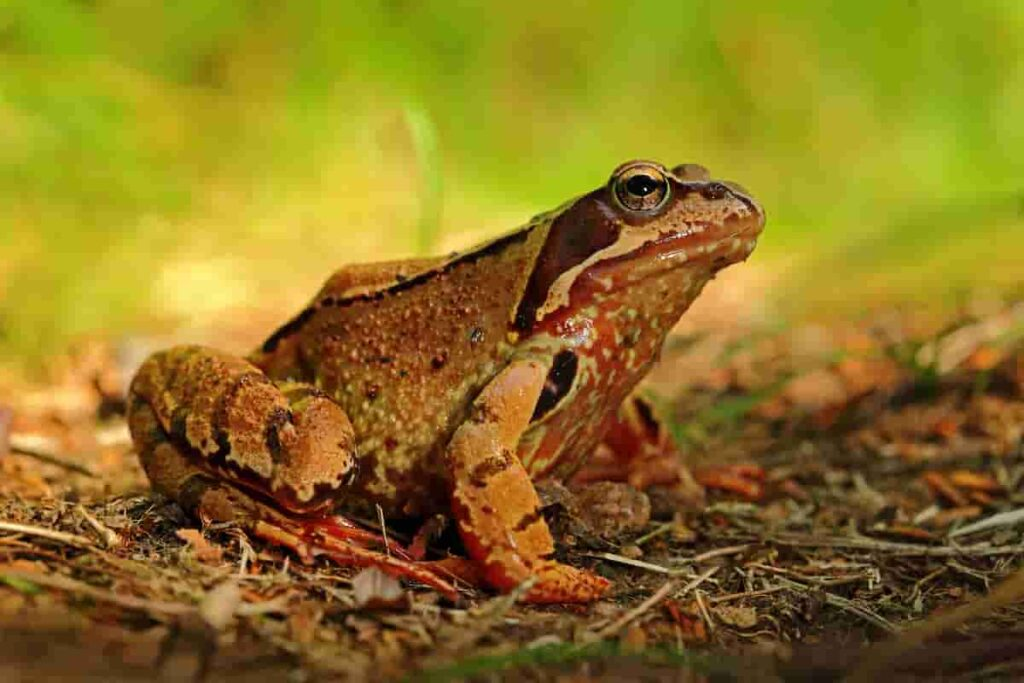 Frogs-are-one-of-the-animals-that-coexisted-with-dinosaurs-AdventureDinosaurs