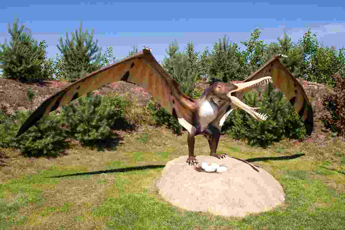 Pterosaur-eggs-have-been-found-in-China-and-Argentina-AdventureDinosaurs