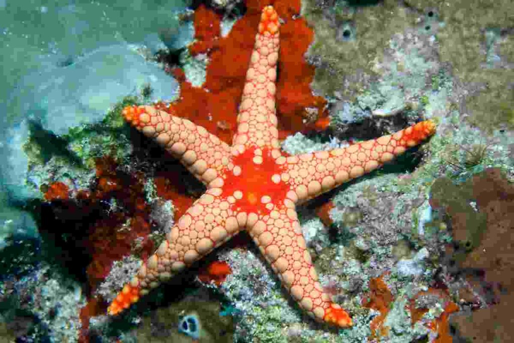 Sea-stars-also-known-as-starfish-lived-in-ancient-oceans-AdventureDinosaurs