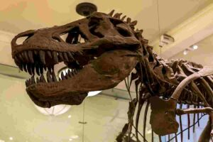 Why-is-the-t-rex-so-famous-AdventureDinosaurs
