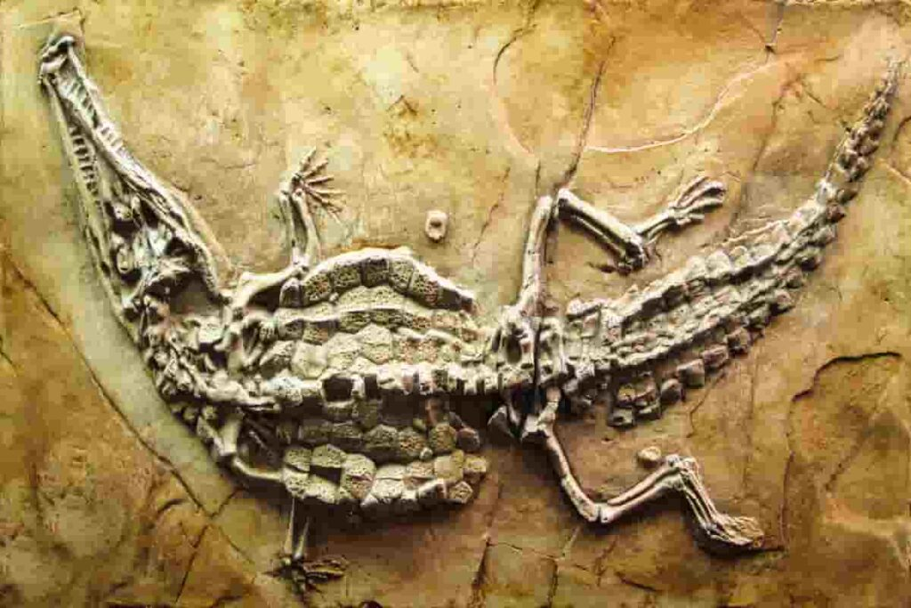 fossil-of-crocodile-that-lived-in-the-cretaceous-period-AdventureDinosaurs