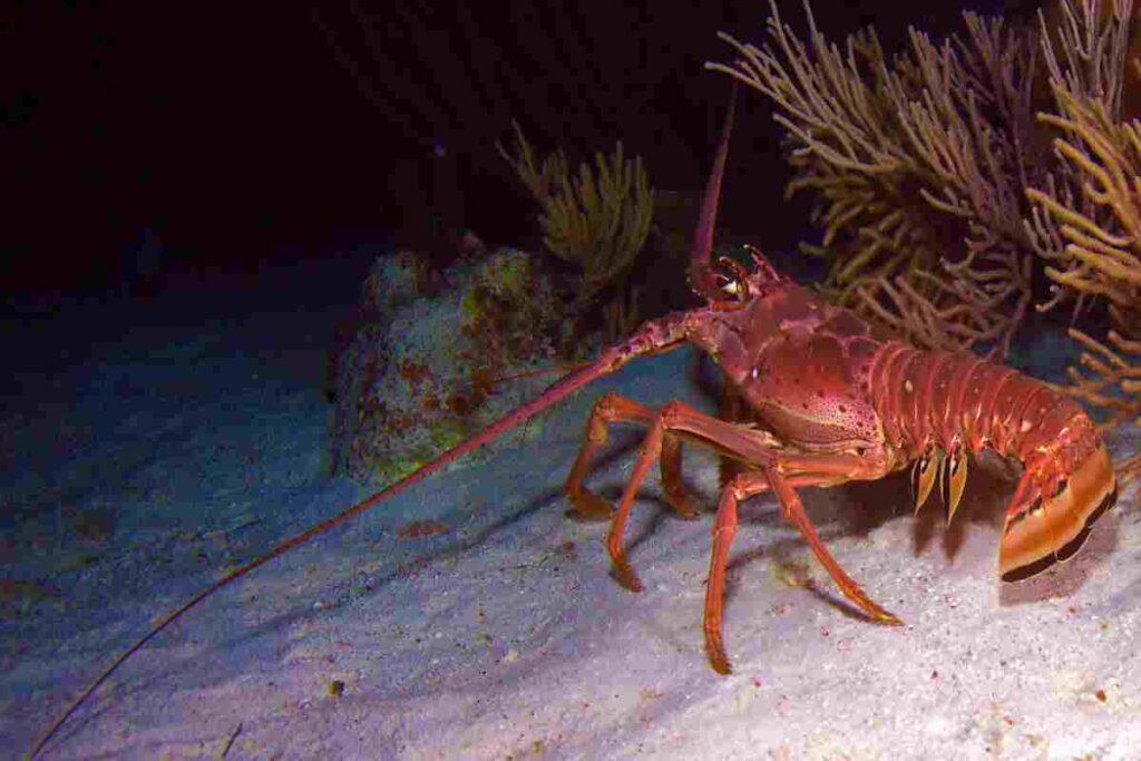 lobsters-were-living-together-in-the-prehistoric-seas-with-marine-reptiles-AdventureDinosaurs