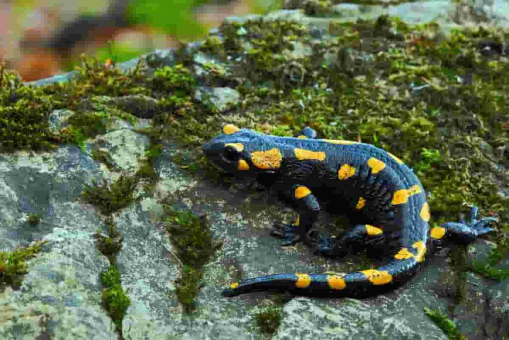 salamanders-existed-together-with-dinosaurs-AdventureDinosaurs