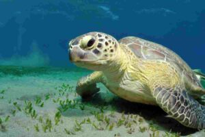sea-turtles-coexisted-together-with-dinosaurs-AdventureDinosaurs