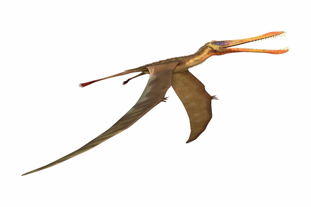 some-pterosaurs-had-features-that-are-defined-in-dragon-literature-AdventureDinosaurs
