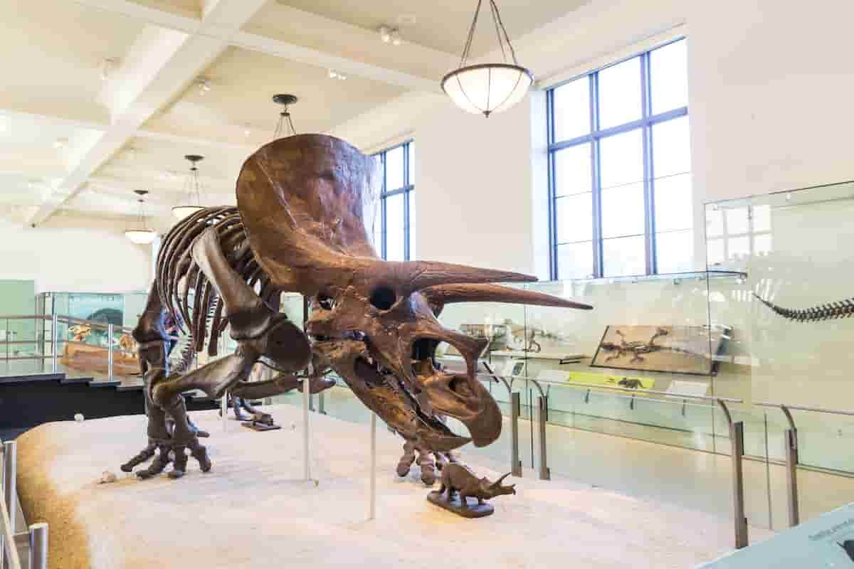 triceratops-compared-to-an-elephant-the-surprising-differences-AdventureDinosaurs